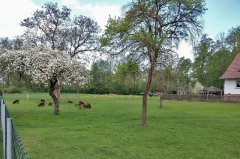 Die Schaf auf der Weide